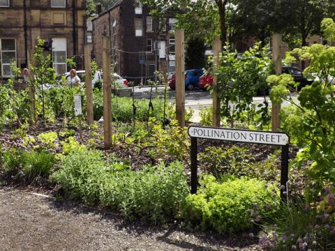 pollination street